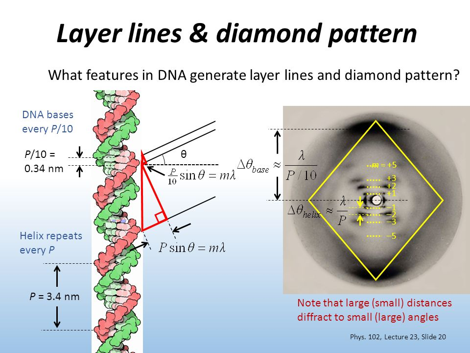 Layer lines & diamond pattern Phys.
