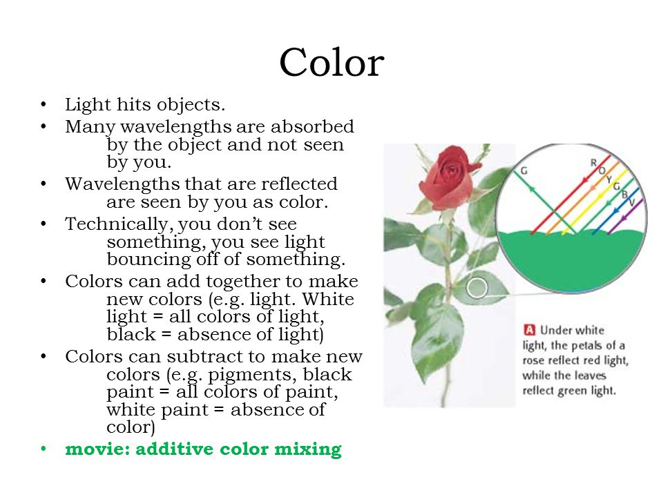 Color Light hits objects. Many wavelengths are absorbed by the object and not seen by you. Wavelengths that are reflected are seen by you as color. Te