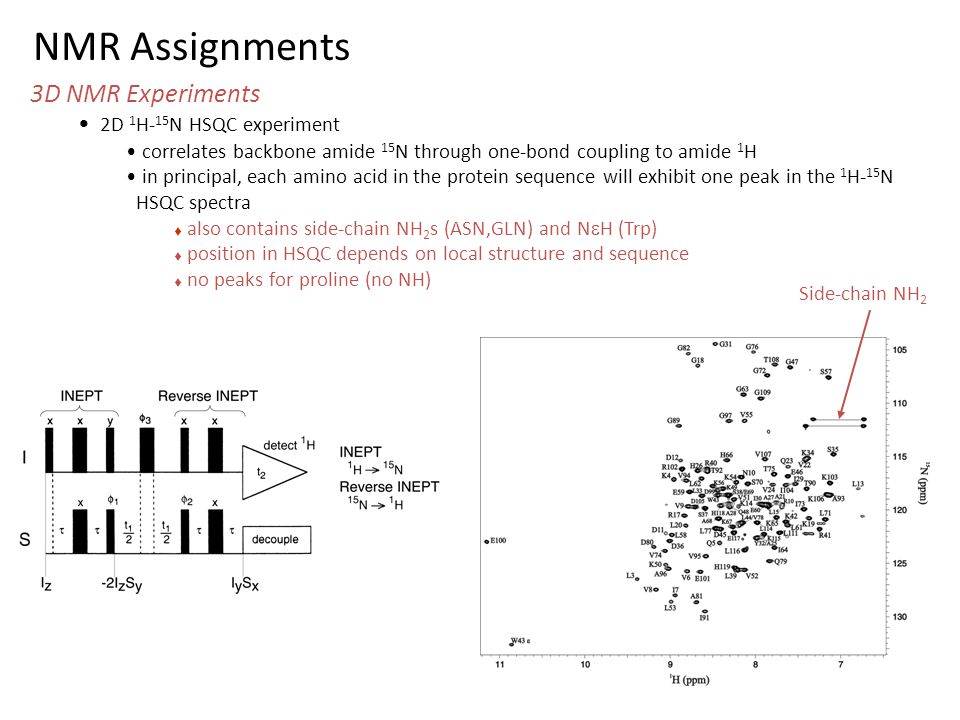 NMR Assignments 3D NMR Experiments 2D 1 H- 15 N HSQC experiment correlates backbone amide 15 N through one-bond coupling to amide 1 H in principal, ea