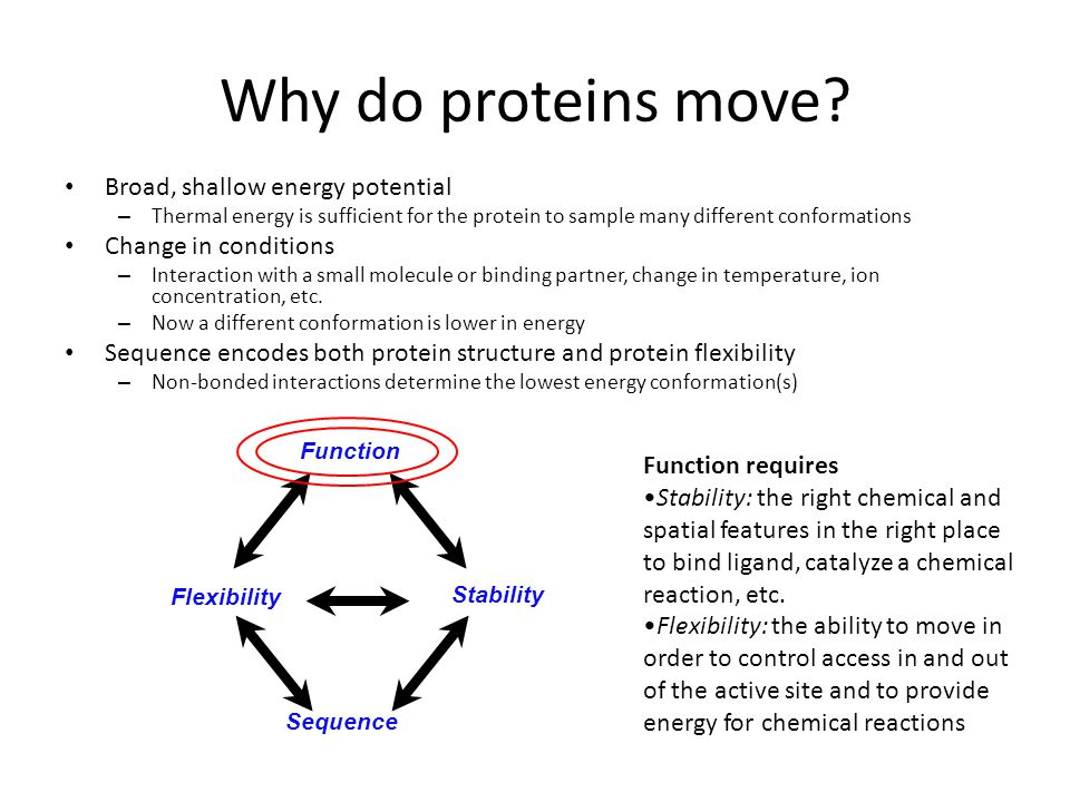 Why do proteins move? Broad, shallow energy potential – Thermal energy is sufficient for the protein to sample many different conformations Change in