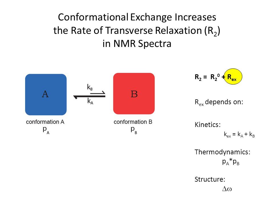 Conformational Exchange Increases the Rate of Transverse Relaxation (R 2 ) in NMR Spectra R 2 = R 2 0 + R ex R ex depends on: Kinetics: k ex = k A + k