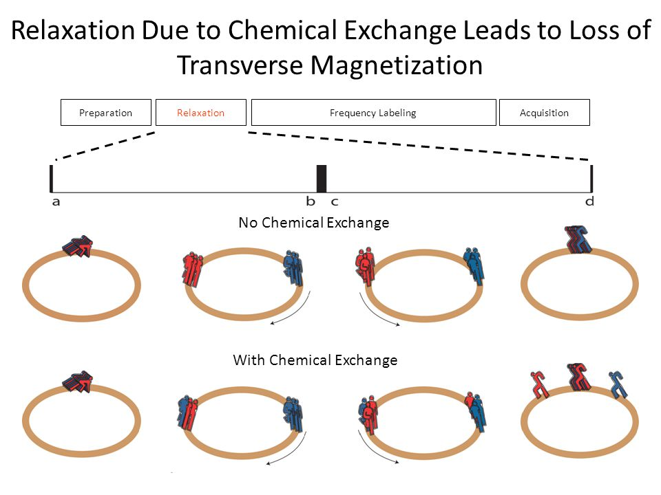 PreparationRelaxationFrequency LabelingAcquisition Relaxation Due to Chemical Exchange Leads to Loss of Transverse Magnetization No Chemical Exchange