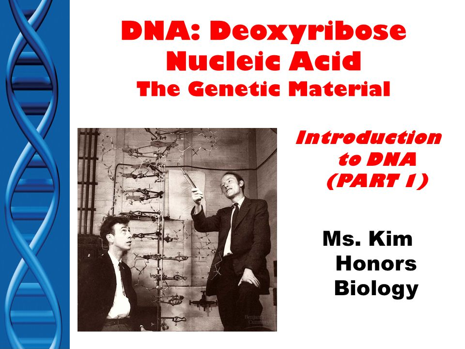 DNA: Deoxyribose Nucleic Acid The Genetic Material Introduction to DNA (PART 1) Ms.