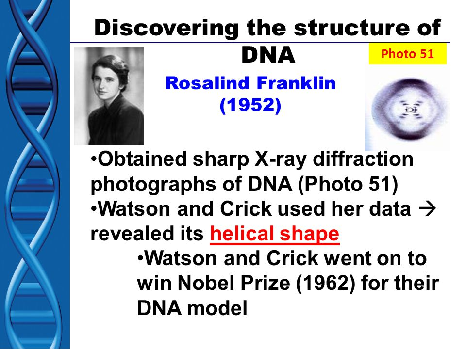 Discovering the structure of DNA Rosalind Franklin (1952) Obtained sharp X-ray diffraction photographs of DNA (Photo 51) Watson and Crick used her data  revealed its helical shape Watson and Crick went on to win Nobel Prize (1962) for their DNA model Photo 51