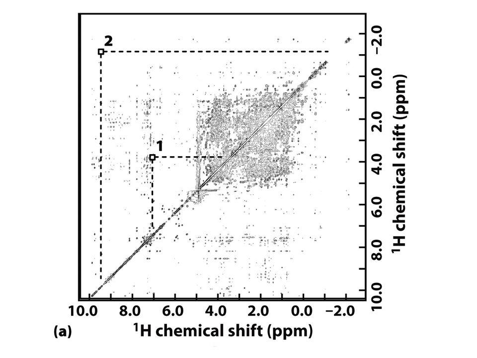 1D NMR spectrum from a globin protein