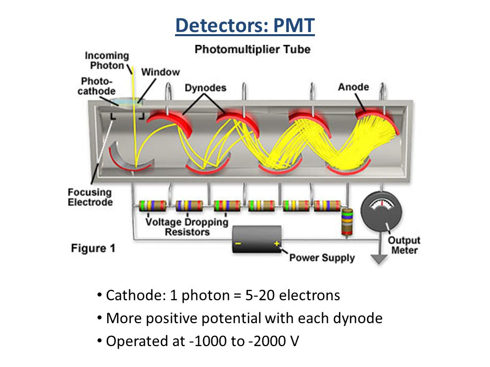 Detectors: PMT Cathode: 1 photon = 5-20 electrons More positive potential with each dynode Operated at -1000 to -2000 V