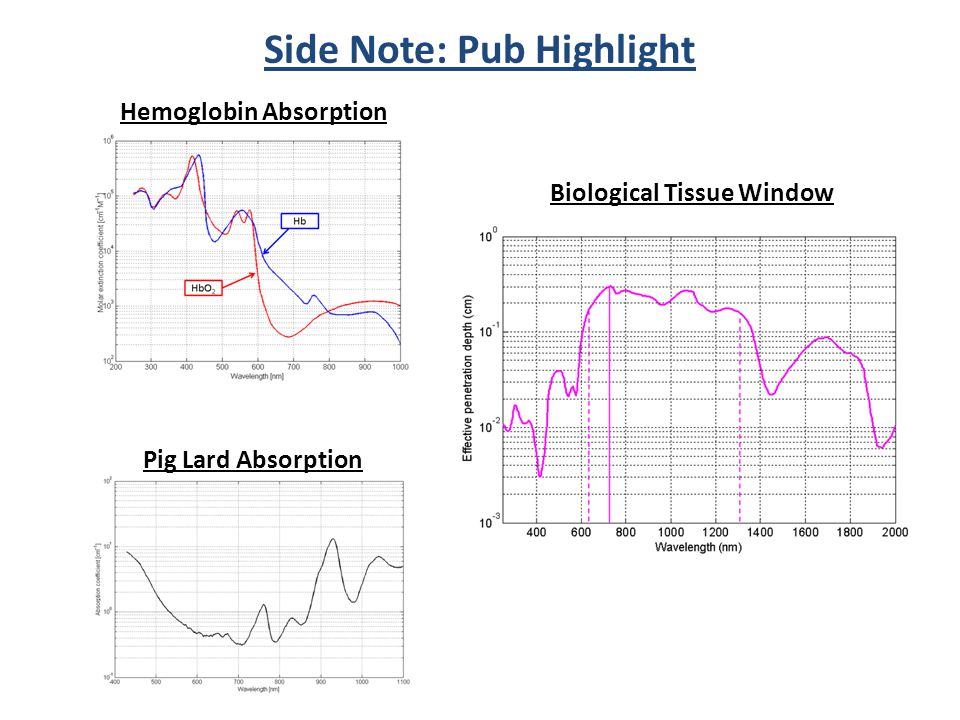Side Note: Pub Highlight Biological Tissue Window Hemoglobin Absorption Pig Lard Absorption