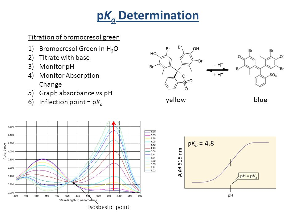 Titration of bromocresol green Isosbestic point pK a Determination A @ 615 nm pK a = 4.8 1)Bromocresol Green in H 2 O 2)Titrate with base 3)Monitor pH 4)Monitor Absorption Change 5)Graph absorbance vs pH 6)Inflection point = pK a - H + + H + yellowblue