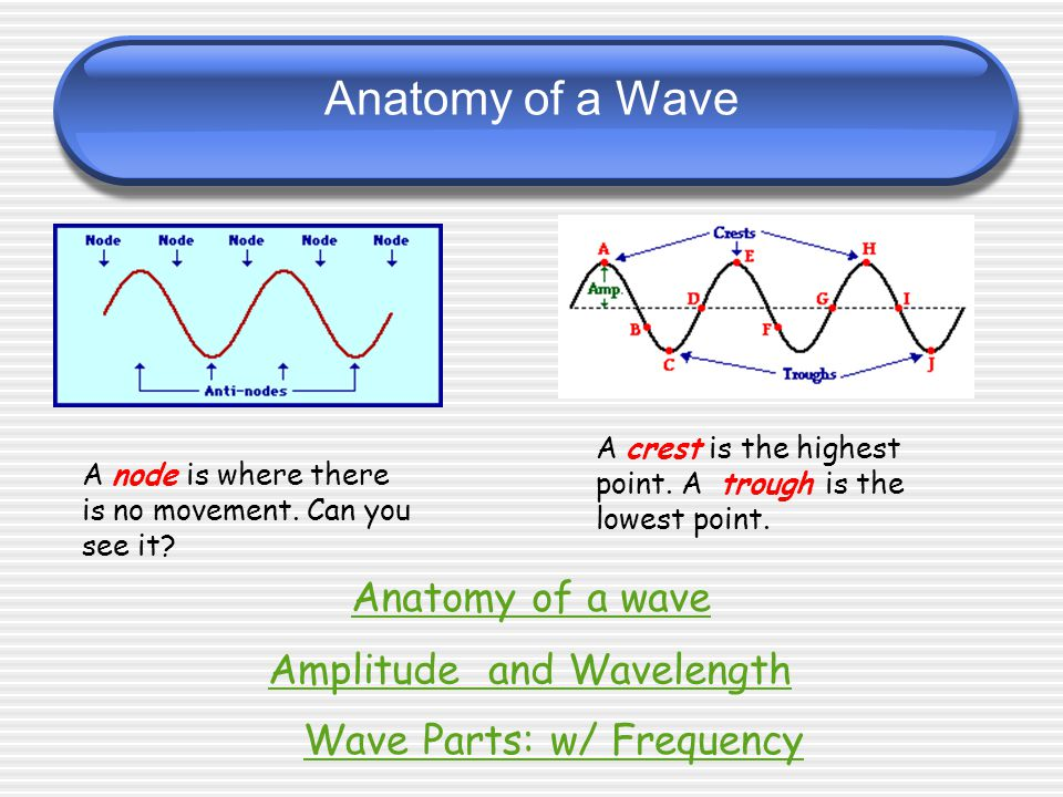 Mechanical Waves Transverse Wave - The disturbance vibrates perpendicular to the direction of wave travel (TRANS = Across).