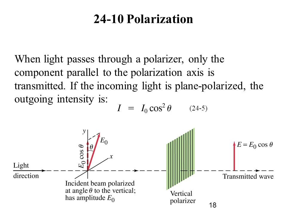 24-10 Polarization When light passes through a polarizer, only the component parallel to the polarization axis is transmitted.