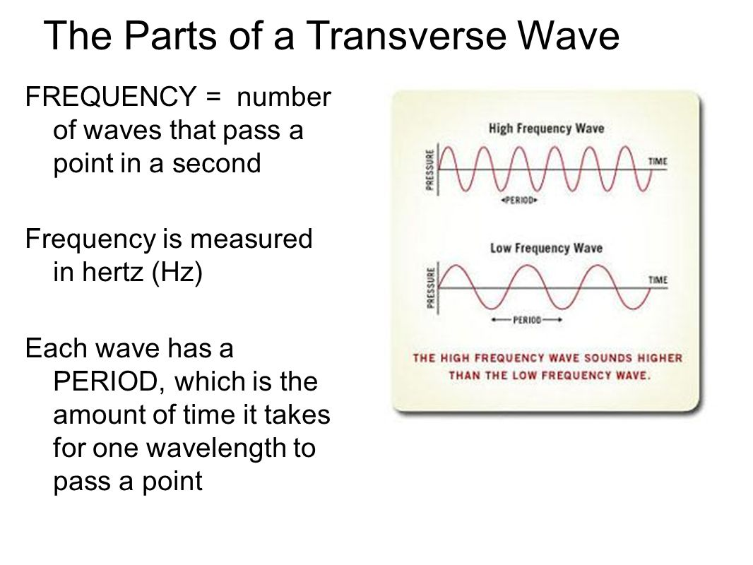 The Parts of a Transverse Wave FREQUENCY = number of waves that pass a point in a second Frequency is measured in hertz (Hz) Each wave has a PERIOD, w