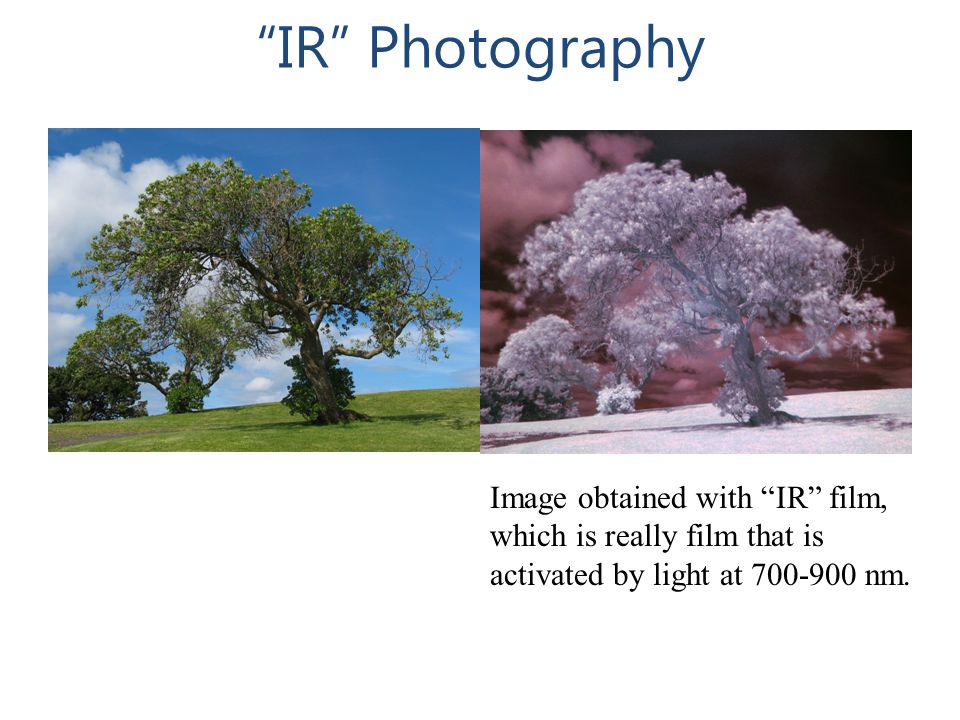 """IR"" Photography Image obtained with ""IR"" film, which is really film that is activated by light at 700-900 nm."