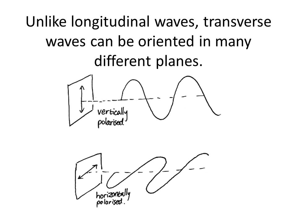 Unlike longitudinal waves, transverse waves can be oriented in many different planes.