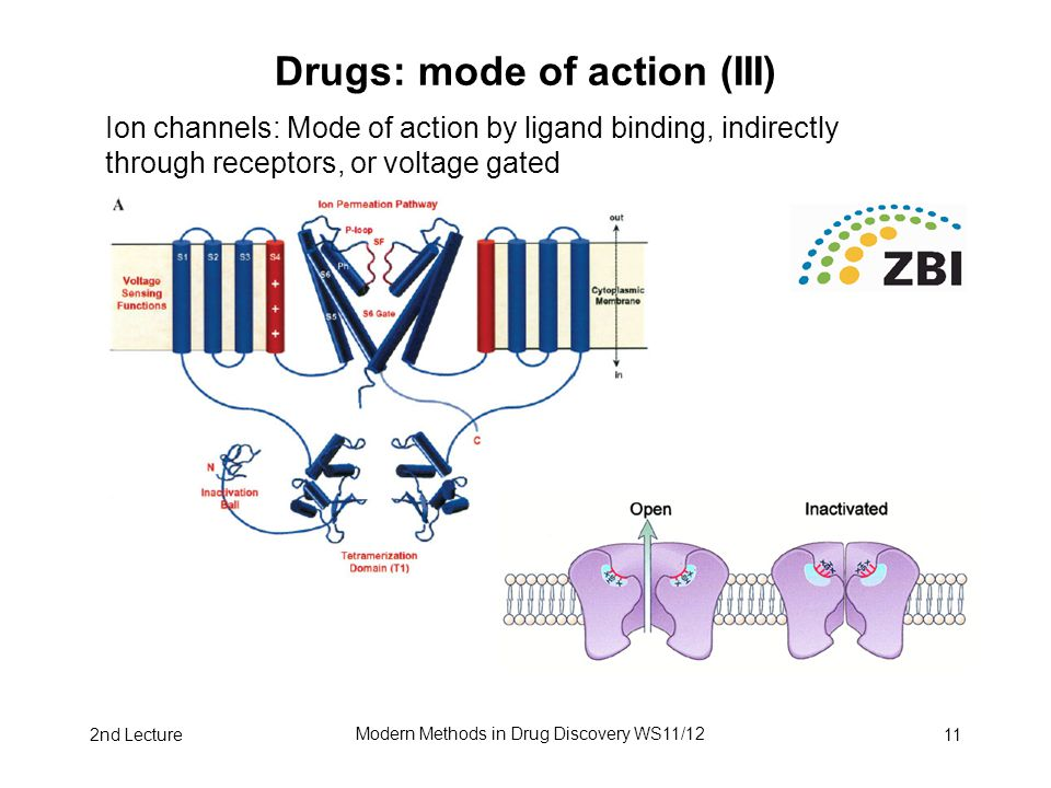 2nd Lecture Modern Methods in Drug Discovery WS11/12 11 Drugs: mode of action (III) Ion channels: Mode of action by ligand binding, indirectly through