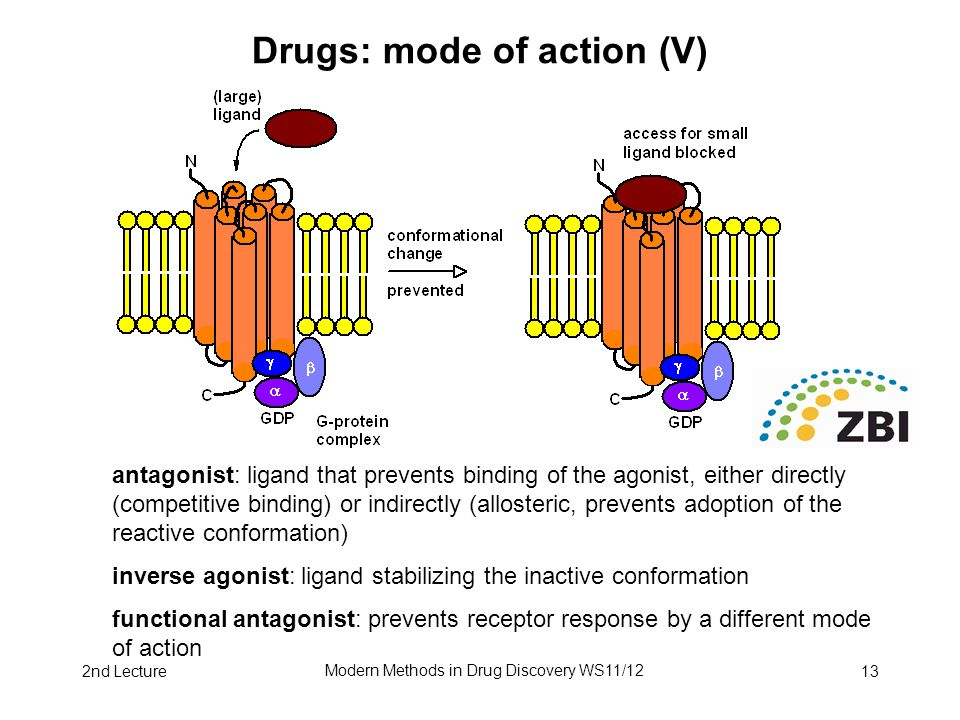 2nd Lecture Modern Methods in Drug Discovery WS11/12 13 Drugs: mode of action (V) antagonist: ligand that prevents binding of the agonist, either dire
