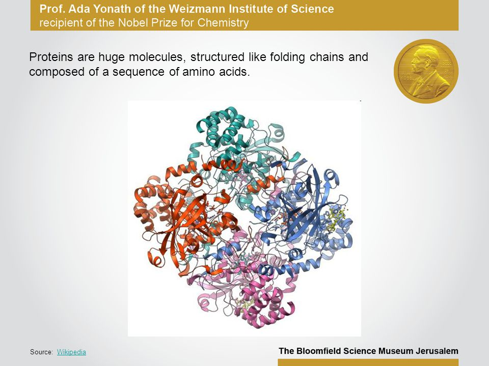Proteins are huge molecules, structured like folding chains and composed of a sequence of amino acids.