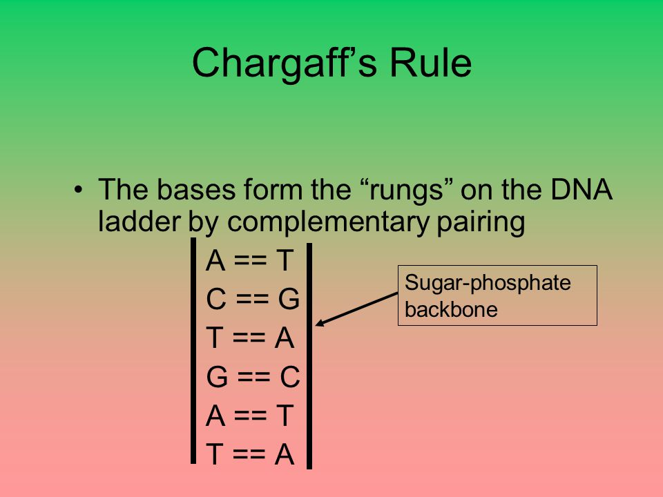 "Chargaff's Rule The bases form the ""rungs"" on the DNA ladder by complementary pairing A == T C == G T == A G == C A == T T == A Sugar-phosphate backbo"