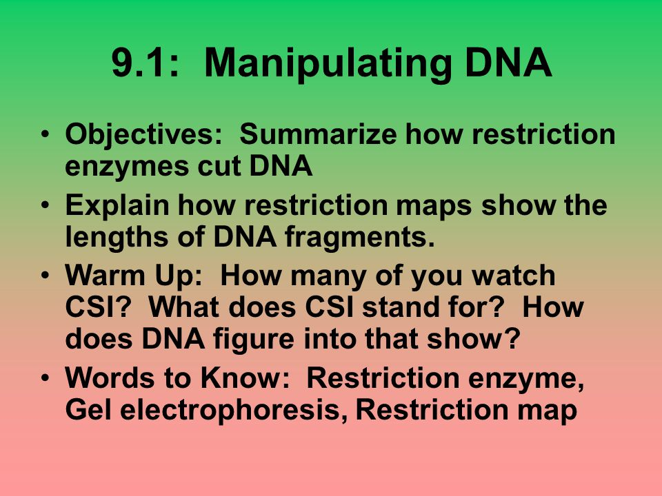 9.1: Manipulating DNA Objectives: Summarize how restriction enzymes cut DNA Explain how restriction maps show the lengths of DNA fragments. Warm Up: H