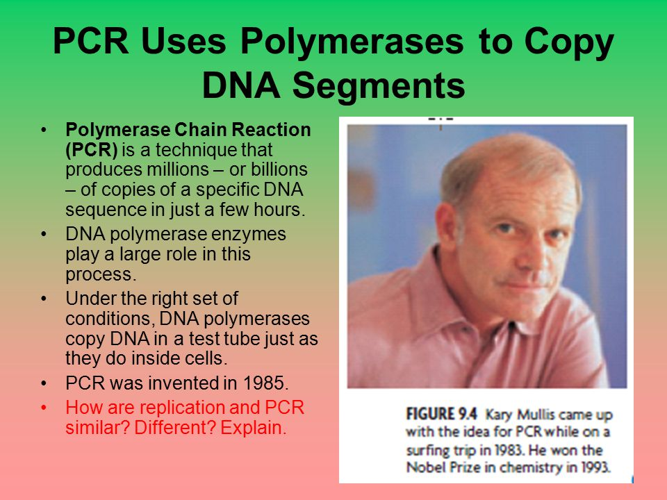 PCR Uses Polymerases to Copy DNA Segments Polymerase Chain Reaction (PCR) is a technique that produces millions – or billions – of copies of a specifi