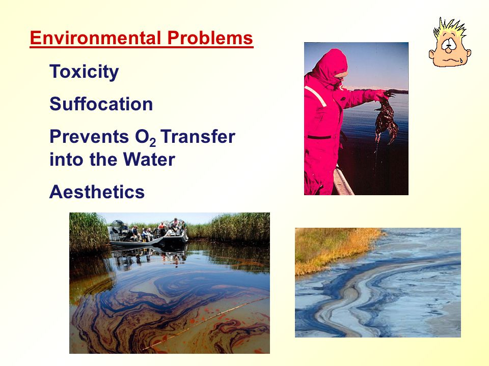 Toxicity Suffocation Prevents O 2 Transfer into the Water Aesthetics Environmental Problems