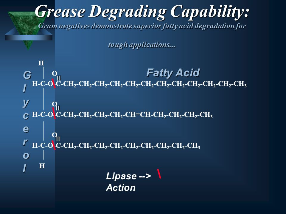 Grease Degrading Capability: Gram negatives demonstrate superior fatty acid degradation for tough applications... H O H-C-O-C-CH 2 -CH 2 -CH 2 -CH 2 -