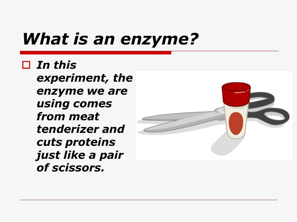 What is an enzyme.