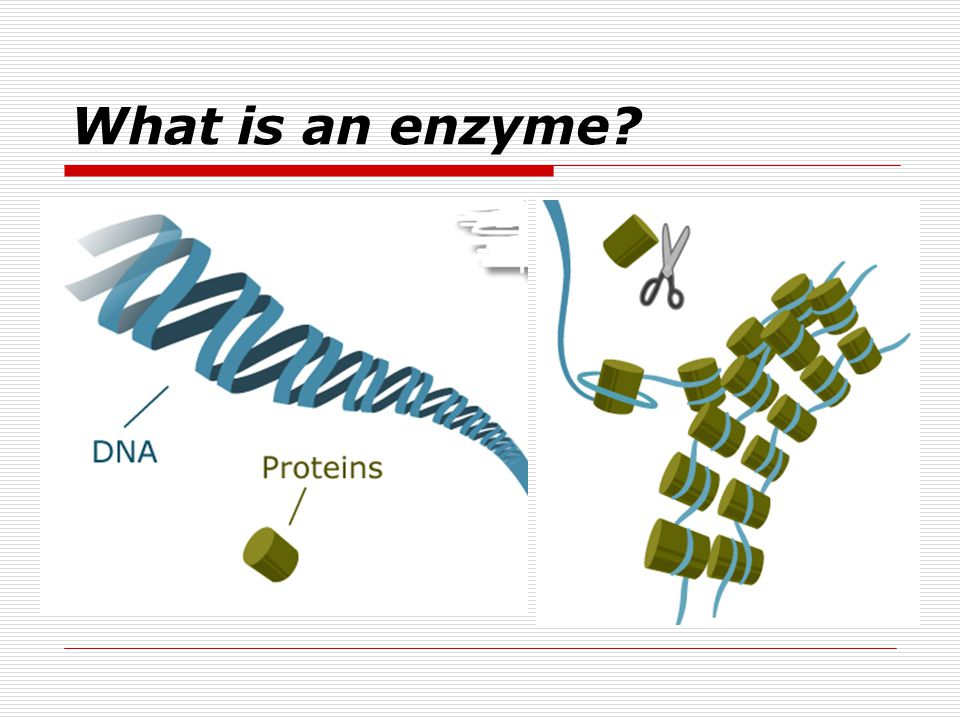 What is an enzyme?