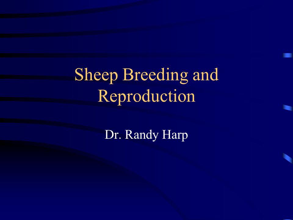 Sheep Breeding and Reproduction Dr. Randy Harp