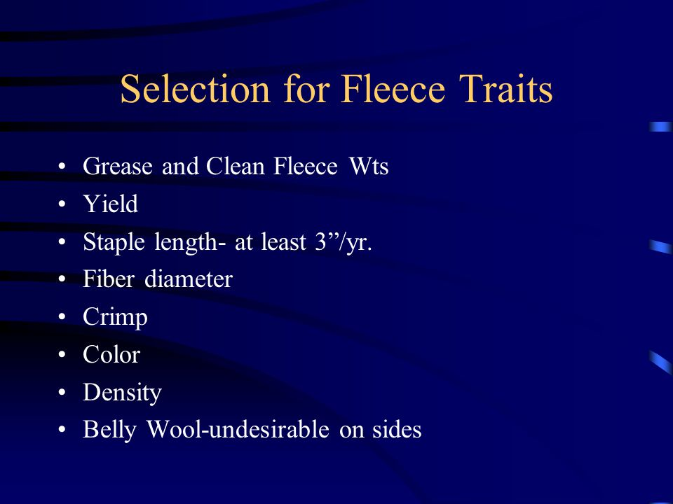 """Selection for Fleece Traits Grease and Clean Fleece Wts Yield Staple length- at least 3""""/yr. Fiber diameter Crimp Color Density Belly Wool-undesirable"""