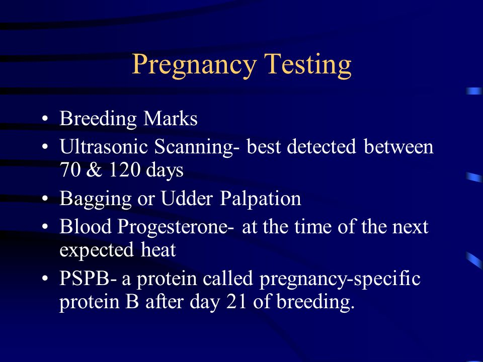 Pregnancy Testing Breeding Marks Ultrasonic Scanning- best detected between 70 & 120 days Bagging or Udder Palpation Blood Progesterone- at the time o