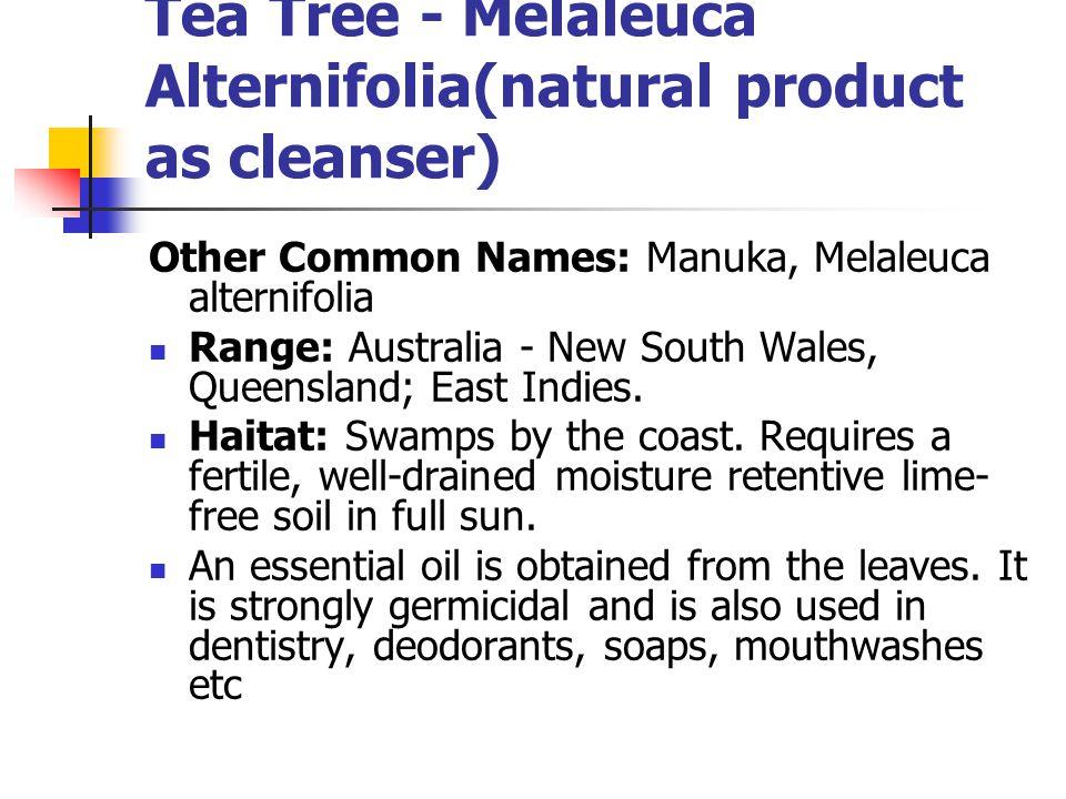 Tea Tree - Melaleuca Alternifolia(natural product as cleanser) Other Common Names: Manuka, Melaleuca alternifolia Range: Australia - New South Wales,