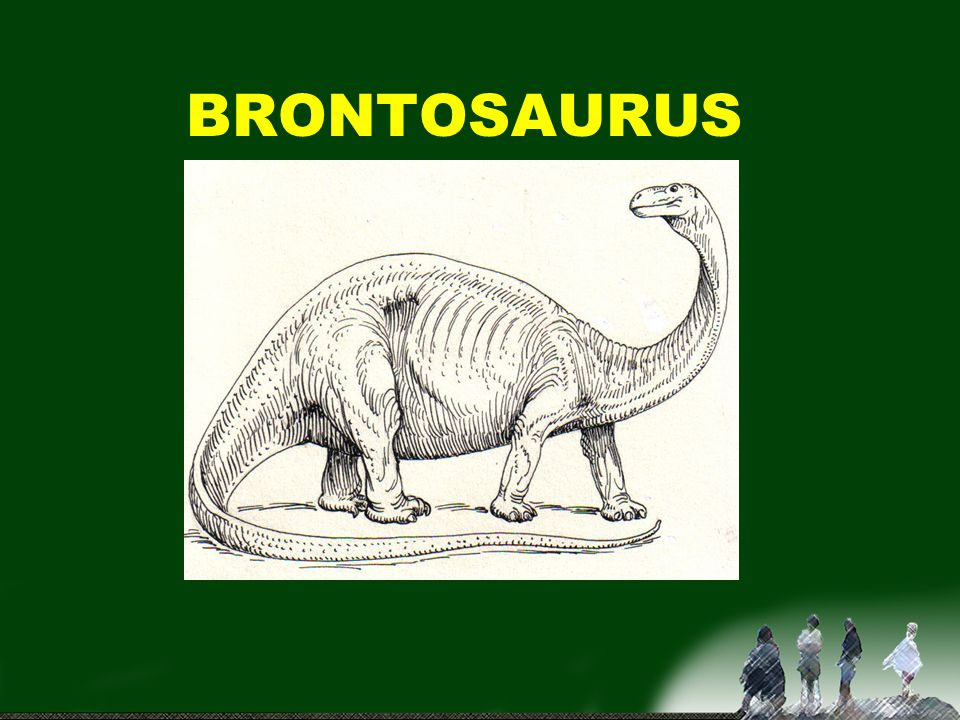 APATOSAURUS BRONTOSAURUS =