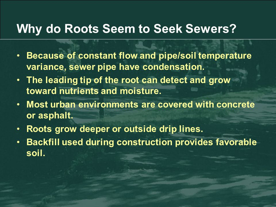 Because of constant flow and pipe/soil temperature variance, sewer pipe have condensation.