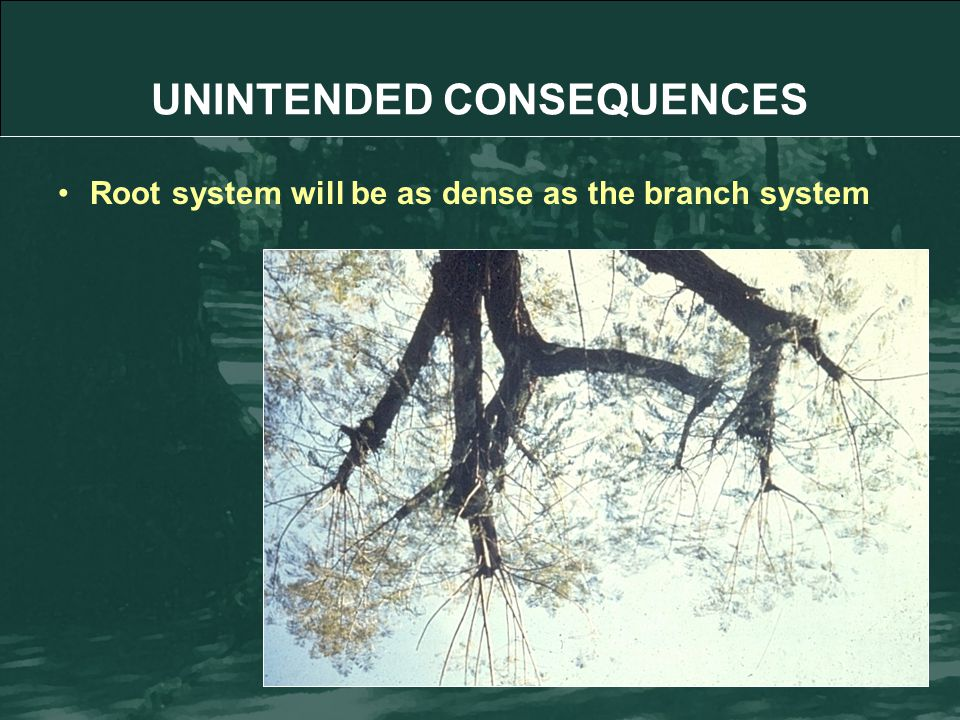 Root system will be as dense as the branch system UNINTENDED CONSEQUENCES