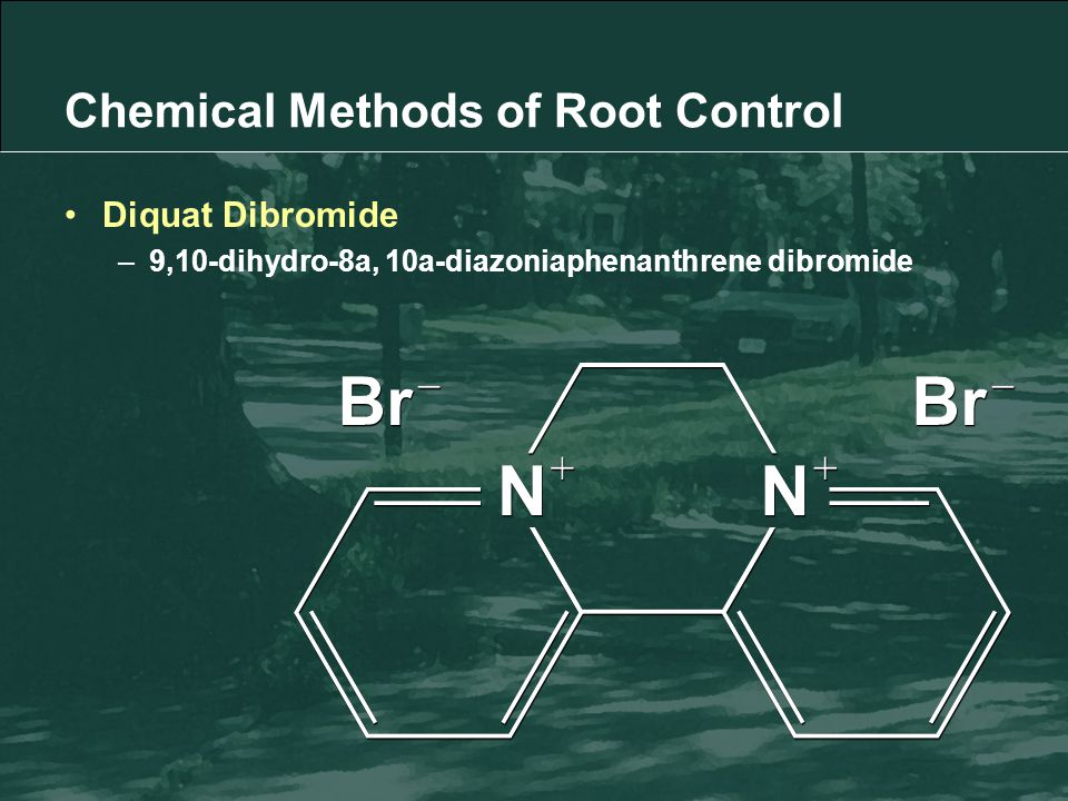 Diquat Dibromide –9,10-dihydro-8a, 10a-diazoniaphenanthrene dibromide Chemical Methods of Root Control