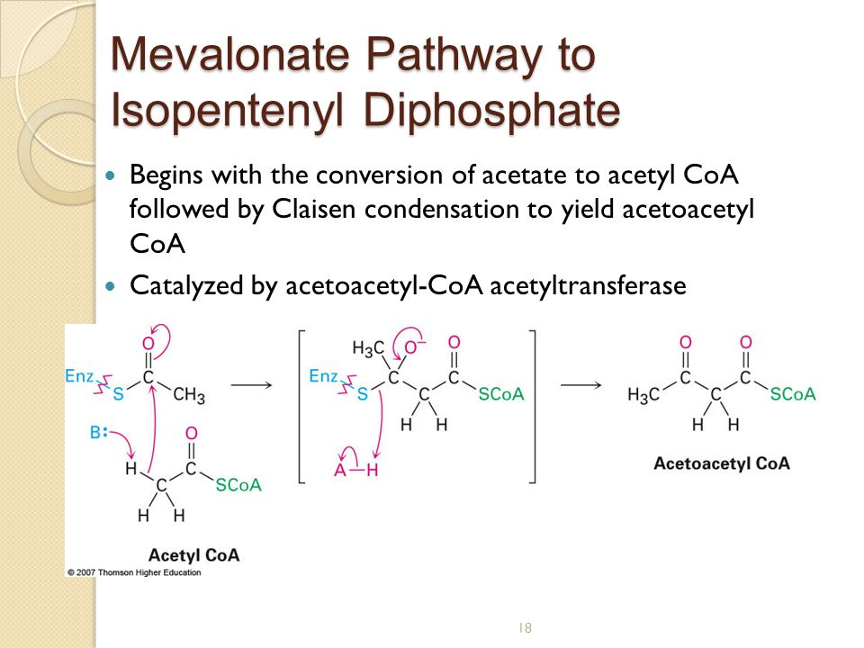 18 Mevalonate Pathway to Isopentenyl Diphosphate Begins with the conversion of acetate to acetyl CoA followed by Claisen condensation to yield acetoacetyl CoA Catalyzed by acetoacetyl-CoA acetyltransferase