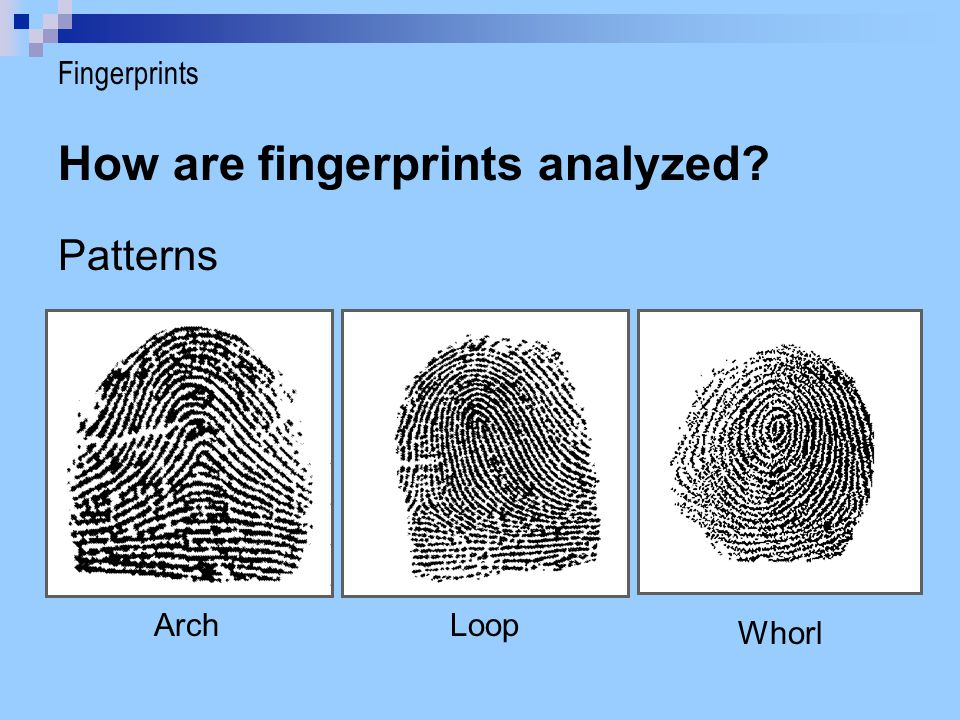 How are fingerprints analyzed? Patterns ArchLoop Whorl Fingerprints