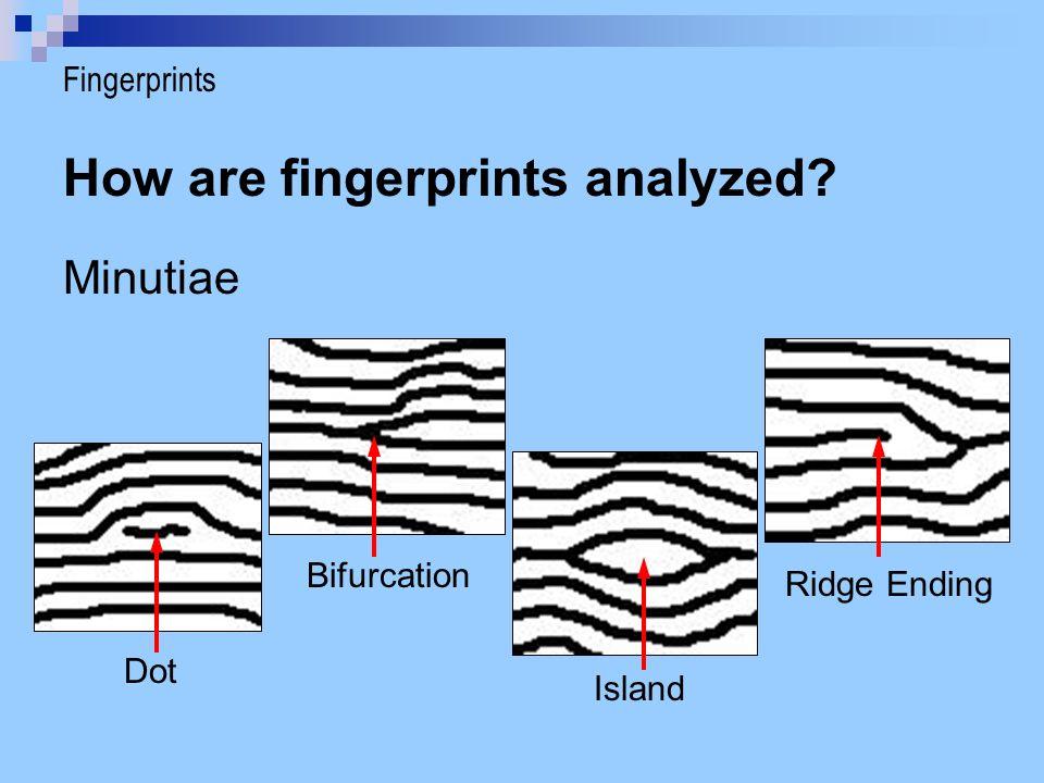 How are fingerprints analyzed? Minutiae Dot Bifurcation Island Ridge Ending Fingerprints