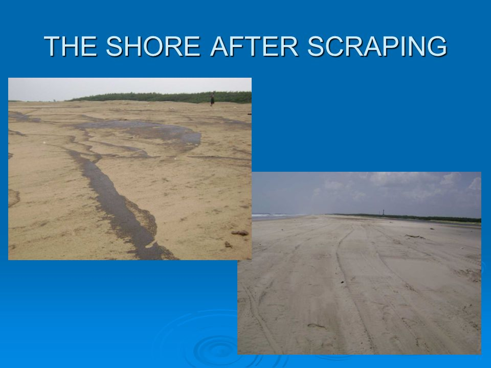 THE SHORE AFTER SCRAPING