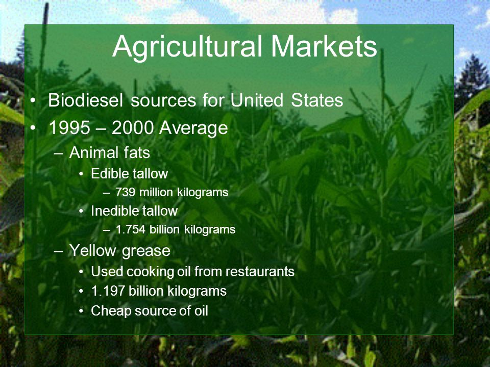 Agricultural Markets Biodiesel sources for United States 1995 – 2000 Average –Animal fats Edible tallow –739 million kilograms Inedible tallow –1.754 billion kilograms –Yellow grease Used cooking oil from restaurants 1.197 billion kilograms Cheap source of oil