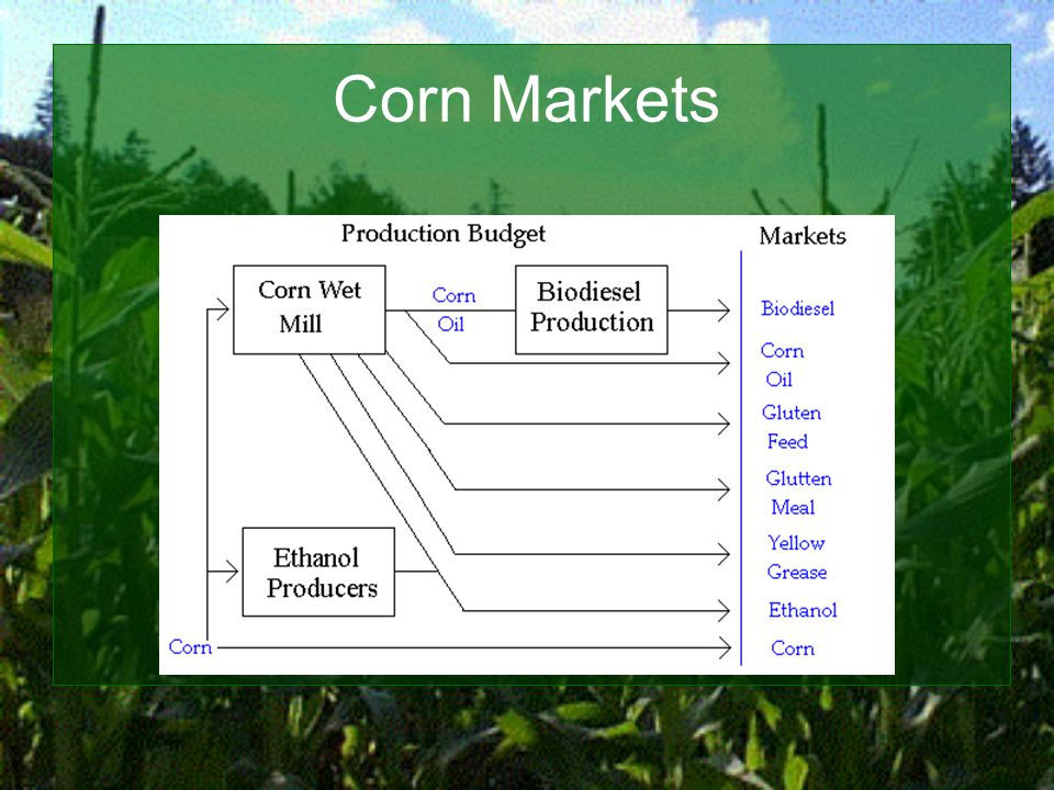 Corn Markets