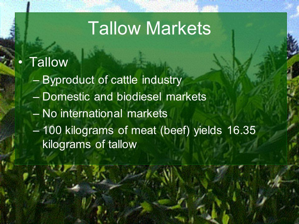Tallow Markets Tallow –Byproduct of cattle industry –Domestic and biodiesel markets –No international markets –100 kilograms of meat (beef) yields 16.35 kilograms of tallow