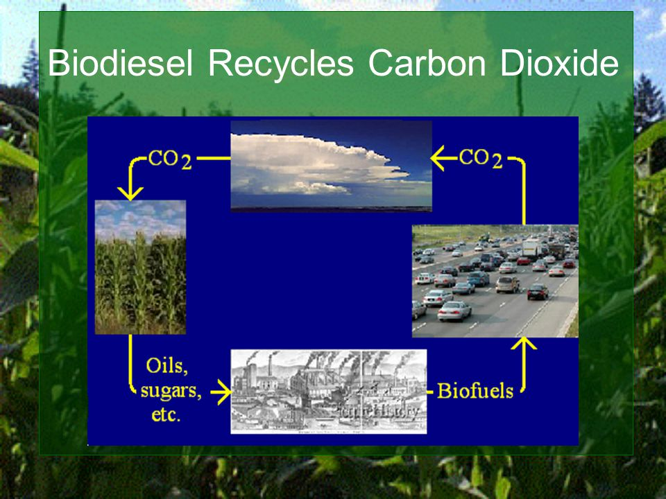 Biodiesel Recycles Carbon Dioxide