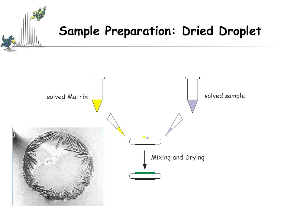 Sample Preparation: Dried Droplet solved Matrix solved sample Mixing and Drying