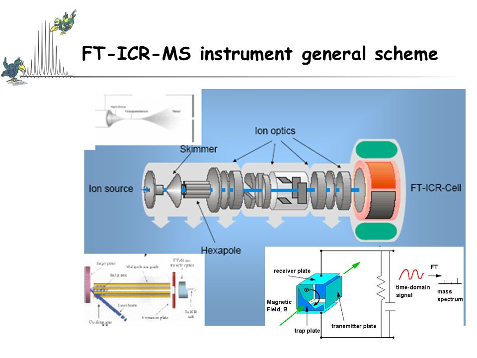 FT-ICR-MS instrument general scheme