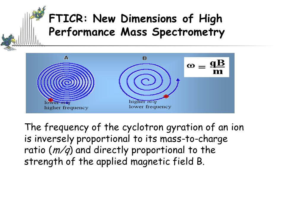 FTICR: New Dimensions of High Performance Mass Spectrometry The frequency of the cyclotron gyration of an ion is inversely proportional to its mass-to-charge ratio (m/q) and directly proportional to the strength of the applied magnetic field B.