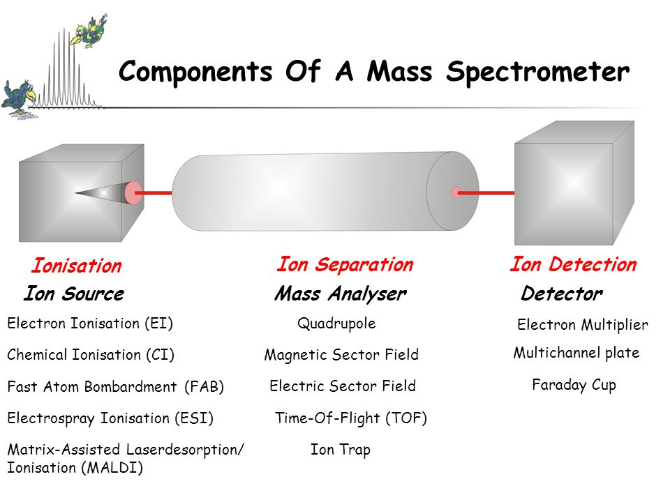 Components Of A Mass Spectrometer Ionisation Ion DetectionIon Separation Ion Source Mass Analyser Detector Electron Ionisation (EI) Chemical Ionisation (CI) Fast Atom Bombardment (FAB) Electrospray Ionisation (ESI) Matrix-Assisted Laserdesorption/ Ionisation (MALDI) Quadrupole Magnetic Sector Field Electric Sector Field Time-Of-Flight (TOF) Ion Trap Electron Multiplier Multichannel plate Faraday Cup