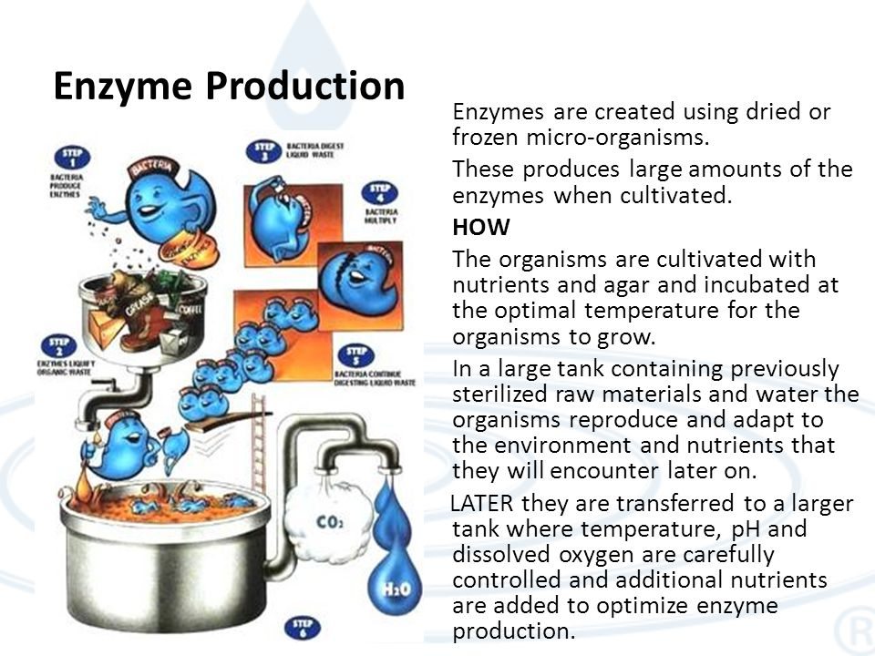 Enzyme Production Enzymes are created using dried or frozen micro-organisms.