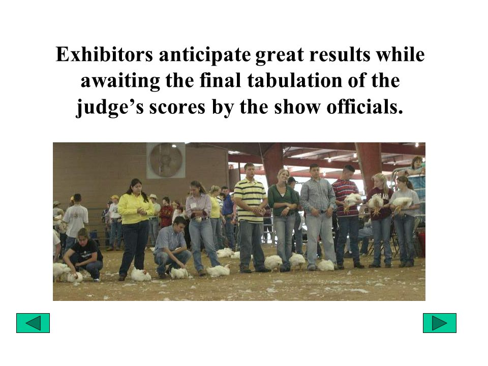 Exhibitors anticipate great results while awaiting the final tabulation of the judge's scores by the show officials.