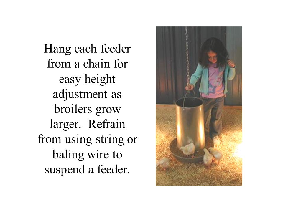 Hang each feeder from a chain for easy height adjustment as broilers grow larger. Refrain from using string or baling wire to suspend a feeder.